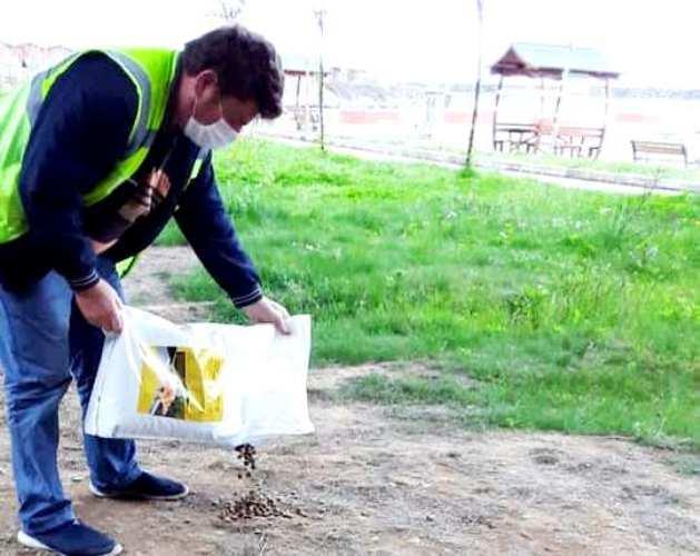 Araklı Belediyesinden sokak hayvanlarına yem ve mama takviyesi
