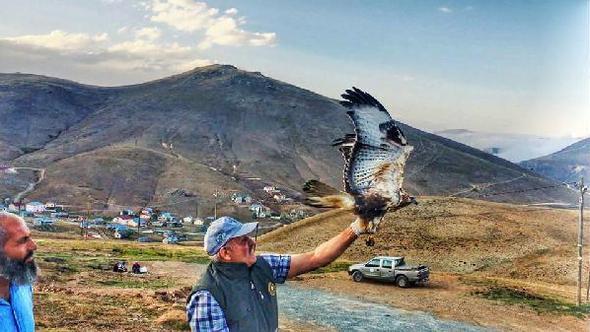 Balahor'da yaralı şahin tedavi sonrası doğaya salındı